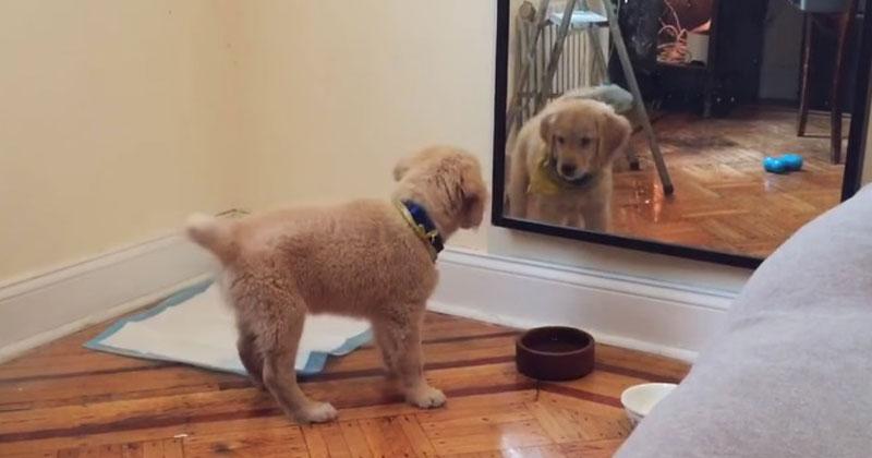 Когда пес увидел, что случилось с его маленькой хозяйкой, ничто не могло его удержать в 2019 году